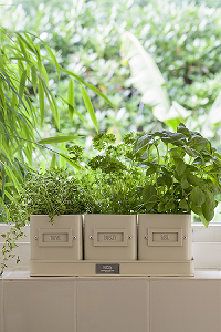 Herb Pots in Jersey Cream