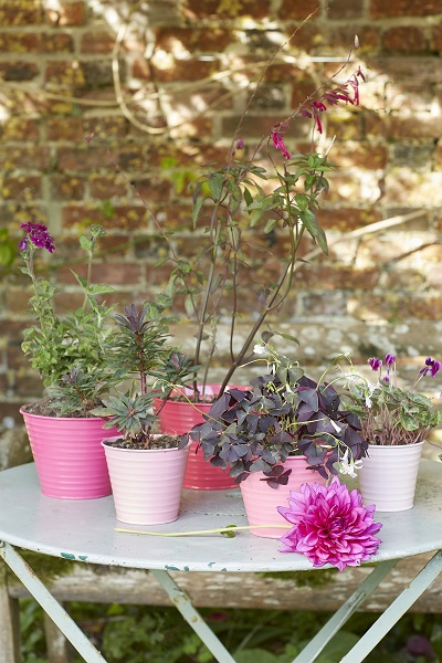 Sophie Conran set of 5 Ombre Pots in Raspberry