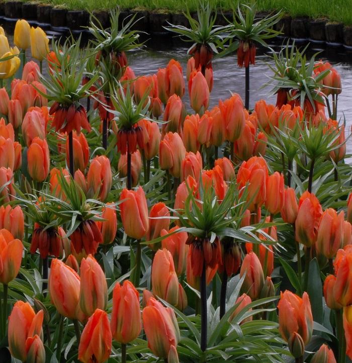 Collection of Orange Emperor and Fritillaria Rubra